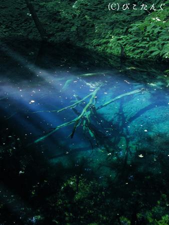 十二湖 青池(写真はイメージです)