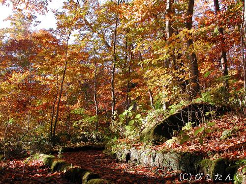 紅葉の蔦沼 沼めぐりの小路