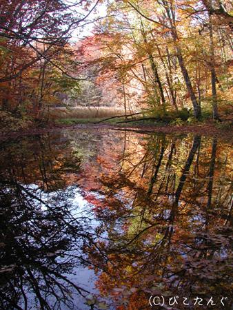 紅葉の瓢箪沼
